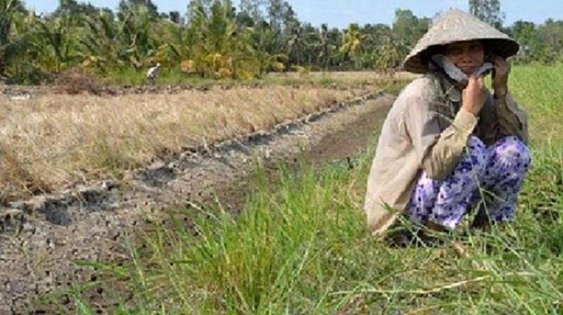 A woman from the Mekong Delta's Ben Tre Province cries by her paddy field which has cracked dry due to hot spells and salinization. (Photo: Tuoi Tre News)
