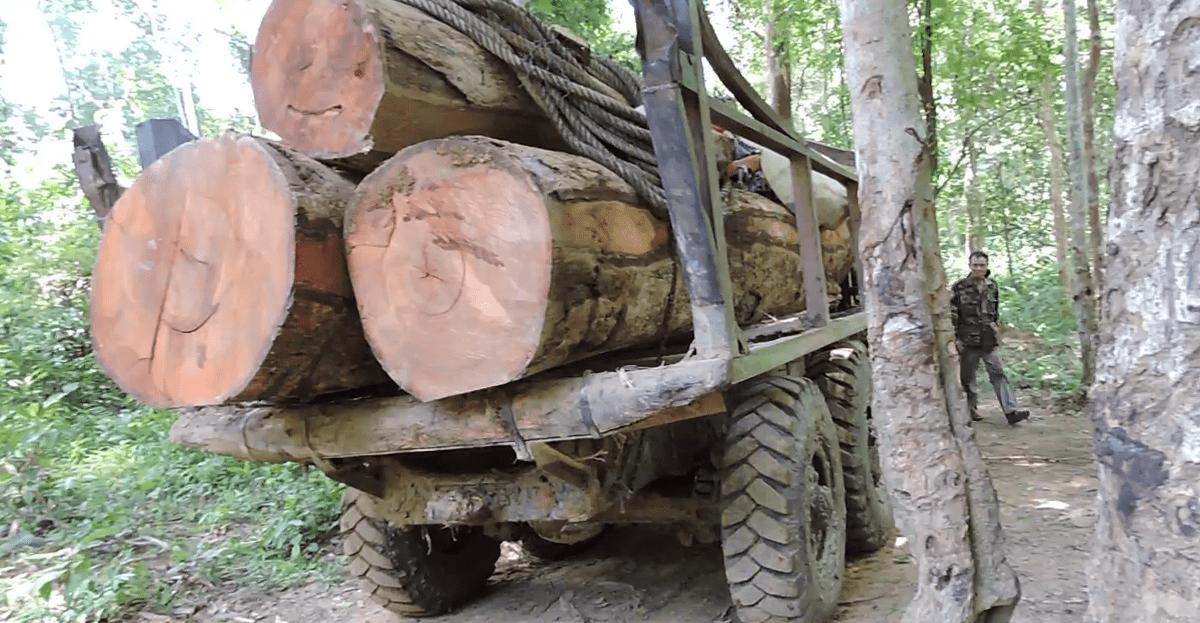 Illegal logging in Cambodia