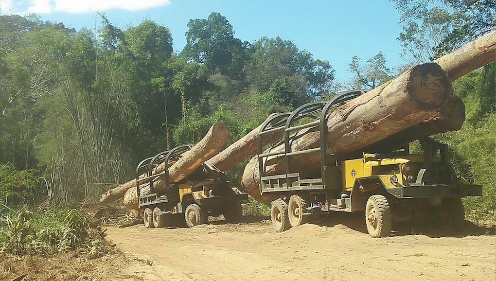Logs illegally cut within Virachey National Park in Cambodia